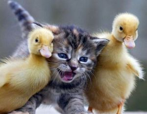 duckling-friend-2